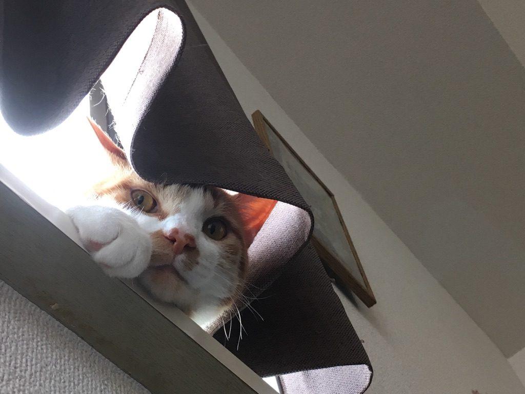 出さ に 猫 ない 外
